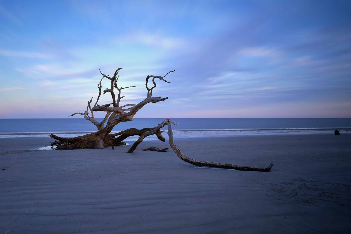 quietly peaceful image of Driftwood Beach