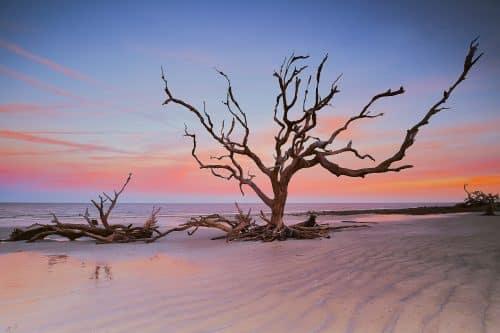 Driftwood Beach Art of the Sky