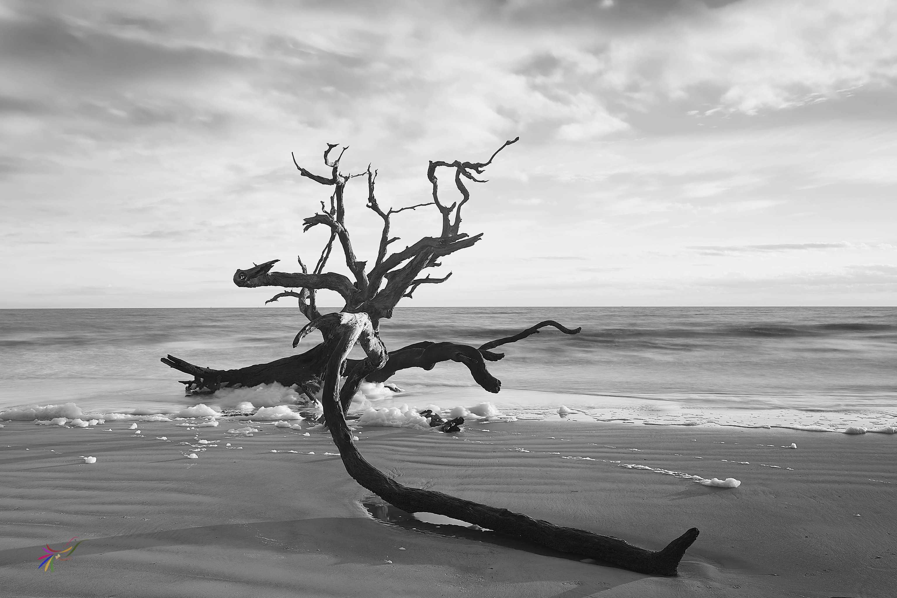 Driftwood Beach