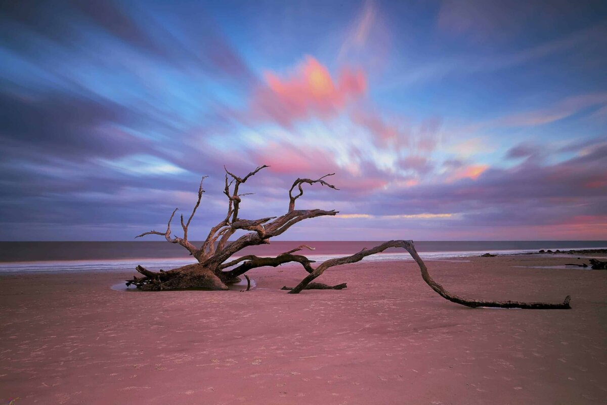 Fine art landscape photography of deadwood tree at driftwood beach