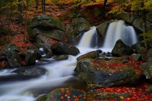 willard brooke state forest