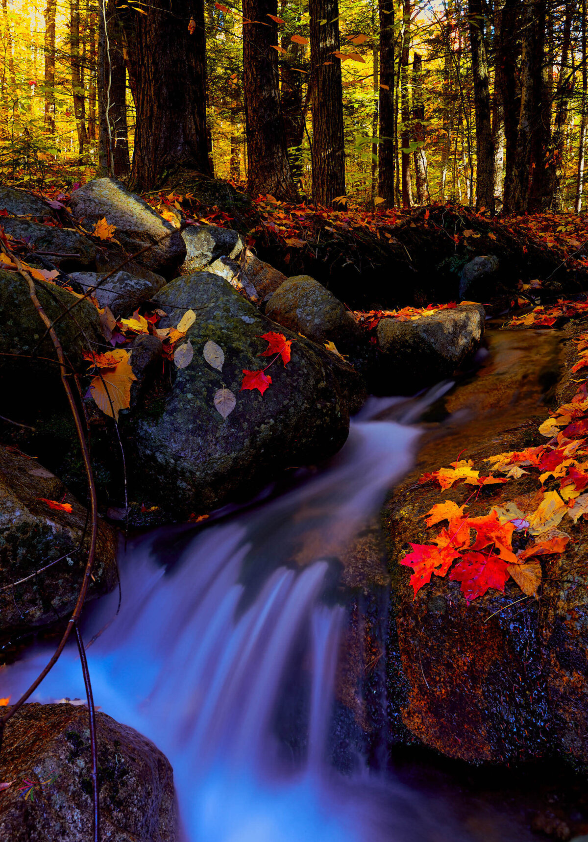 Autumn Woods Nature Trees Water Flow Canvas Pictures Wall Art Prints All Sizes